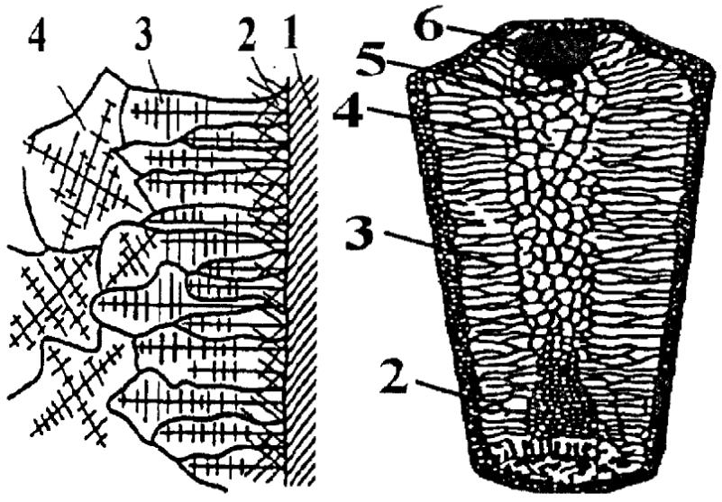 Схема образования слитка спокойной стали в металлической изложнице
